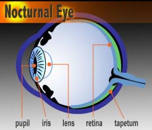 eye-dia